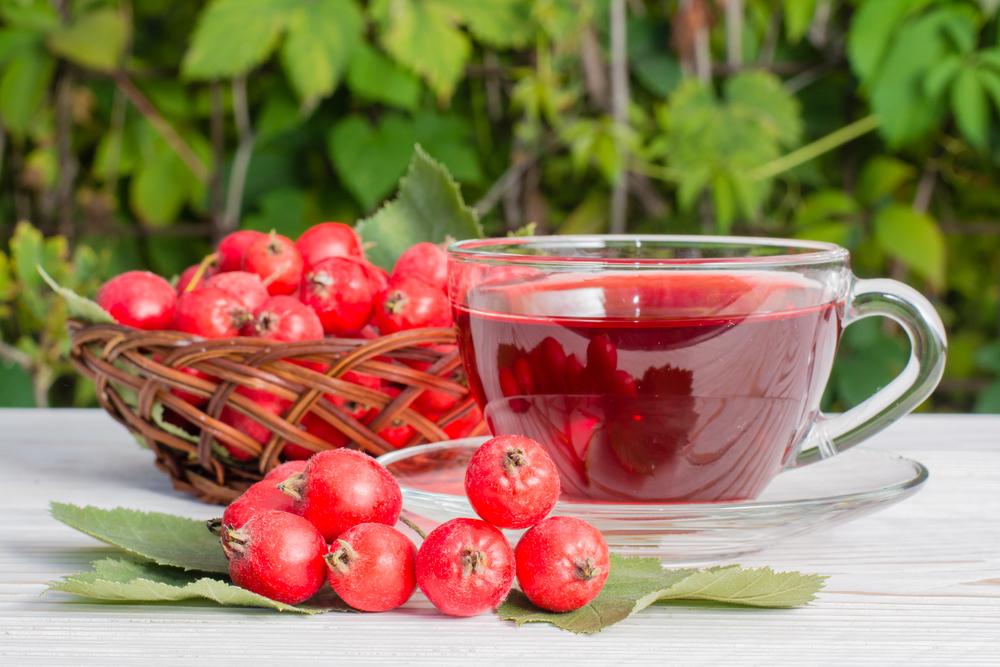 Как правильно пить ягоды боярышника