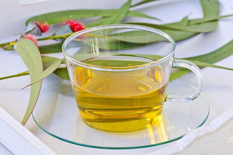 Сухие листья эвкалипта применение в домашних условиях