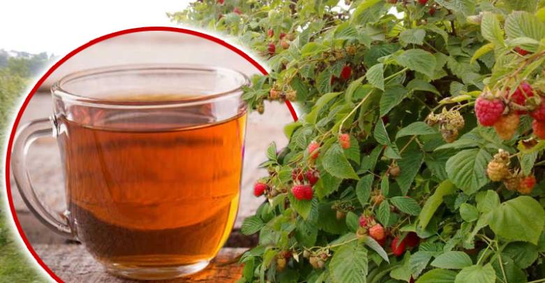 чай из листа малины