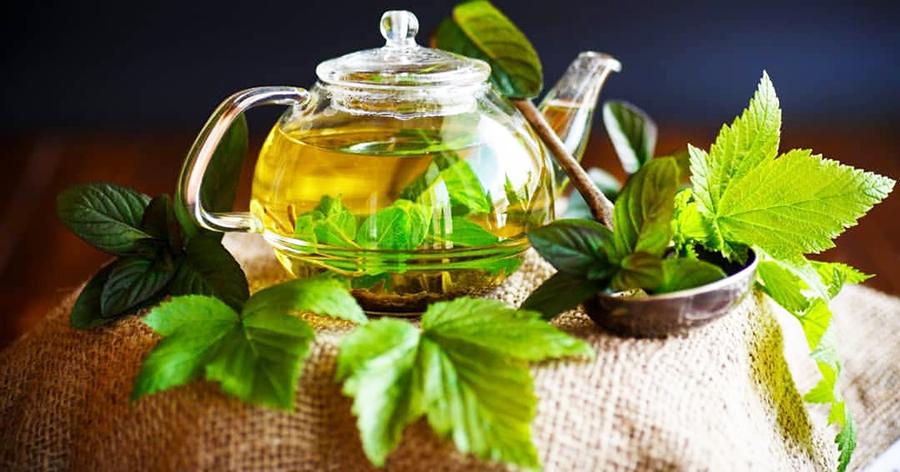 Ферментация листьев смородины для чая в домашних условиях, как ферментировать смородиновые листочки, как хранить готовый ферментированный чай